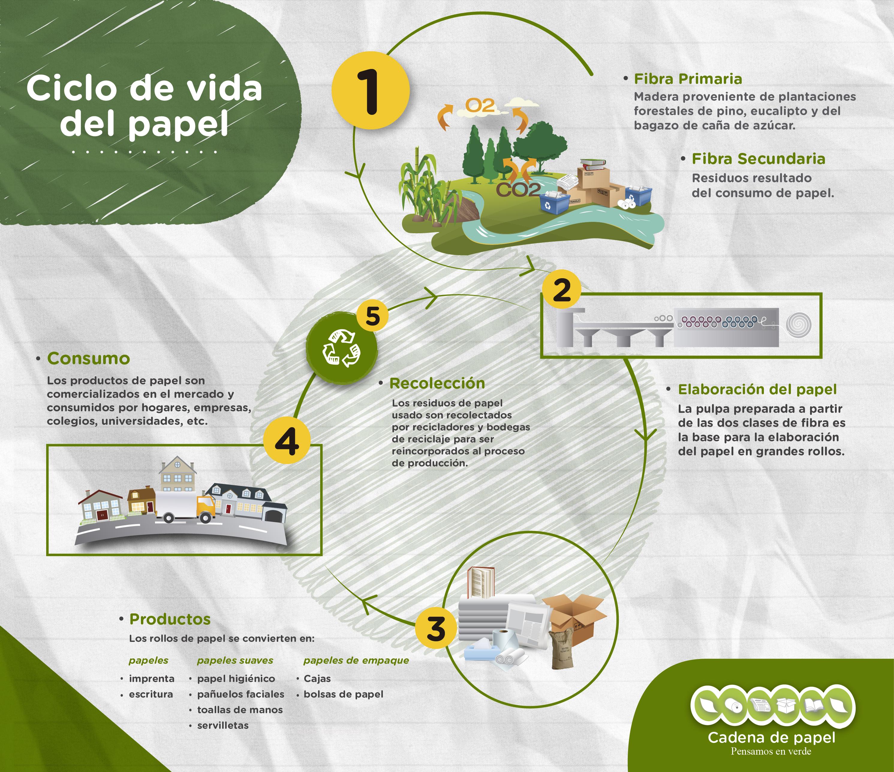 Circuito Productivo De La Caña De Azucar : Ciclo de vida del papel two sides colombia