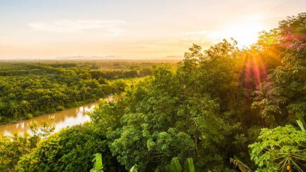 Amazonia: necesitas saber